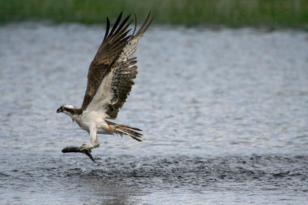 shutterstock_bird of prey