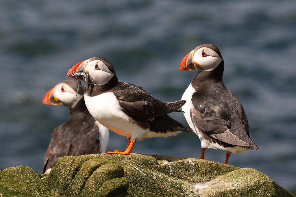 shutterstock_seabird
